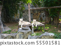White tiger or lion resting in the zoo 55501581