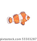 Sea and ocean orange and white striped clownfish. 55503287