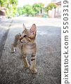 Cute little kitten standing outdoor.  55503319
