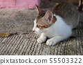 Cute little kitten sitting outdoor.  55503322