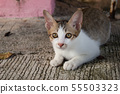 Cute little kitten sitting outdoor. 55503323