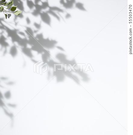 葉子陰影材料在白色背景的 55503470