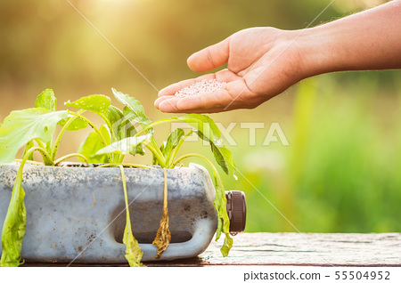 Hand of people giving fertilizer to vegetable in plastic bottle on wooden table with sunlight in morning time 55504952