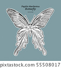 Papilio macilentus, the long tail spangle, is a 55508017
