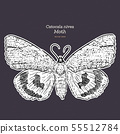 Catocala Moth is a generally Holarctic genus of 55512784