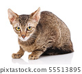Cat, pet, and cute concept - kitten on a white background. 55513895