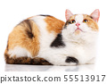 Cat is isolated on white. Cat poster. 55513917