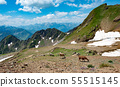 Llamas grazing in the french mountains 55515145
