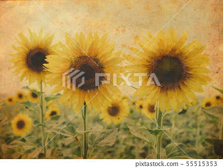 Yellow summertime sun flowers and petals closeup 55515353