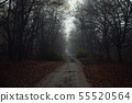 Dark abandoned road in the forest 55520564