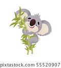 Koala cartoon sitting on a bamboo branch. Vector illustration on white background. 55520907