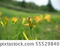 (나가노 현) 시가 고원 · 東館山 고산 식물원 여름 55529840