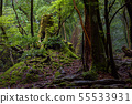 Shiratani Unsuikyo Forest (June) Forest of Yakusugi with fog, National Park Yakushima 55533931