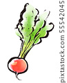刷圖畫菜食物紅色白蘿蔔 55542045