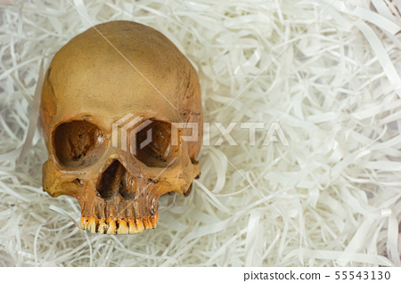 human skull on Cushioning paper for sci content. 55543130