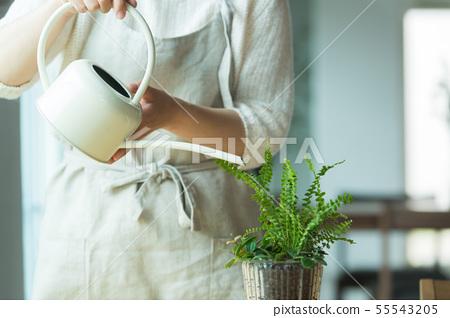 植物澆水 55543205