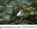 也被稱為:莫奈的池塘(Nendo Shrine) 55545650