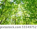 Fresh green forest bath 55549752