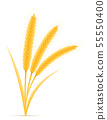 yellow ears of ripe wheat spikelet vector 55550400