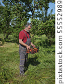 Farmer holding crate with apricot fruit in orchard 55552989