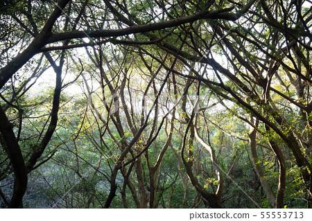 山裡 山の中 山上 森林 Forest 桃園虎頭山 觀光景點 休閒娛樂 55553713