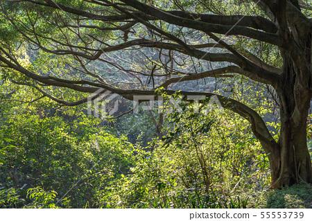 山裡 山の中 山上 森林 Forest 桃園虎頭山 觀光景點 休閒娛樂 55553739