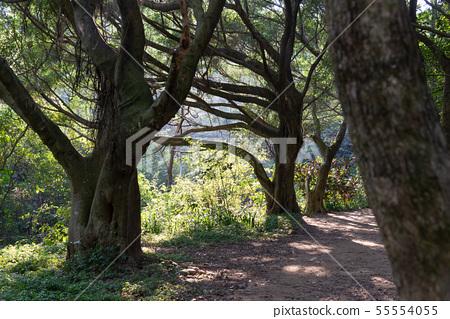 山裡 山の中 山上 森林 Forest 桃園虎頭山 觀光景點 休閒娛樂 55554055