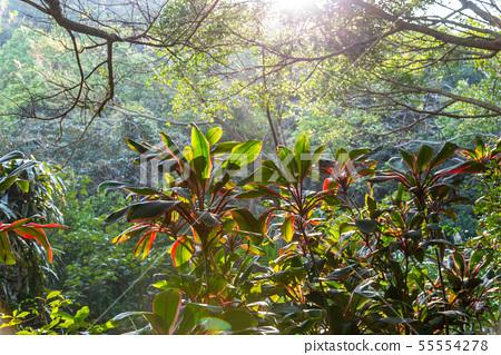 山裡 山の中 山上 森林 Forest 桃園虎頭山 觀光景點 休閒娛樂 55554278