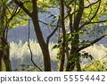 山裡 山の中 山上 森林 Forest 桃園虎頭山 觀光景點 休閒娛樂 55554442