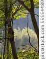 山裡 山の中 山上 森林 Forest 桃園虎頭山 觀光景點 休閒娛樂 55554489