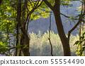 山裡 山の中 山上 森林 Forest 桃園虎頭山 觀光景點 休閒娛樂 55554490