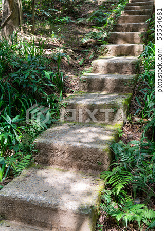 山裡 山の中 山上 森林 Forest 桃園虎頭山 觀光景點 休閒娛樂 55554681