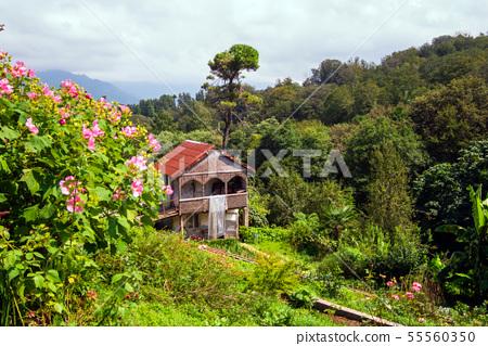 Botanical garden in the Batumi, Georgia 55560350