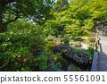 Kamakura Haseji Hosei Pond 55561091