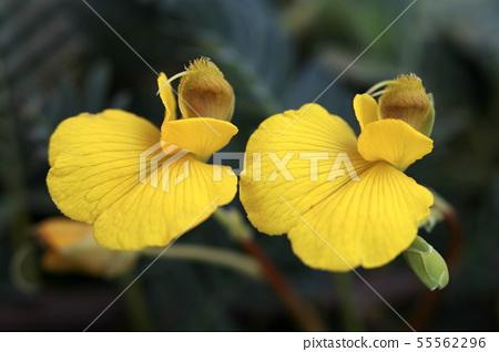 물아카시아꽃 55562296