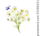 Bouquet of wild watercolor daisies and cornflower 55566251