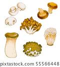 버섯류 55566448
