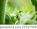 두 폰 청개구리 개구리 개구리 개구리 일본 청개구리 양서류 생물 자연 환경 여름 에코 55567908