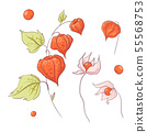 Set in the style of hand drawing twig physalis and flowers, autumn and leaves. 55568753
