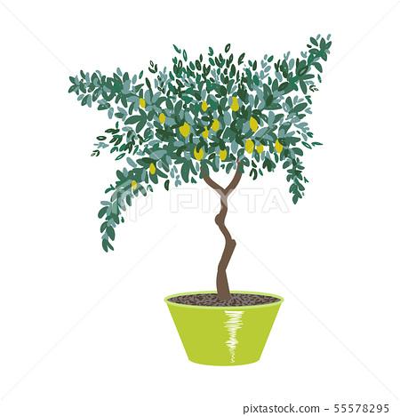 Lemon tree in pot 55578295