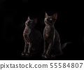 A pair of black cats on a black background. 55584807
