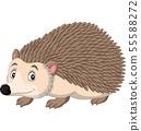 Cartoon happy hedgehog on white background 55588272