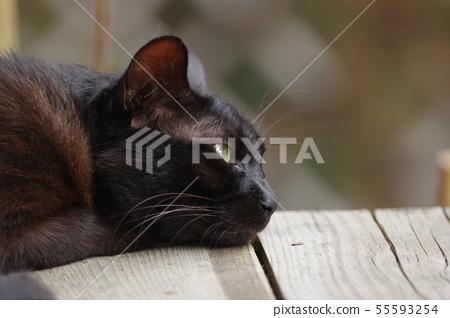 검은 고양이 55593254