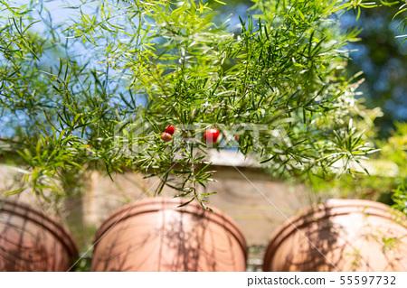 庭院裡的盆栽 Potted Plants in Garden 庭の盆栽 植物 綠意 55597732
