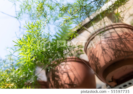 庭院裡的盆栽 Potted Plants in Garden 庭の盆栽 植物 綠意 55597735