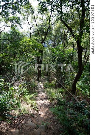 山裡 山の中 山上 森林 Forest 桃園虎頭山 觀光景點 休閒娛樂 55597881
