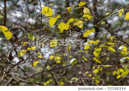 山裡 山の中 山上 森林 Forest 桃園虎頭山 觀光景點 休閒娛樂 55598334