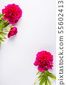 Spring flowers on a gray background - creative 55602413