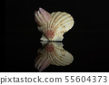 Mollusc sea shell isolated on black glass 55604373