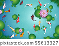 clean water lake with koi fishes 55613327